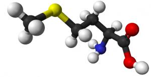 Аминокиселина разгражда мазнините в тялото